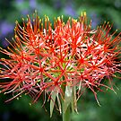 Blood flower by Ann  Palframan
