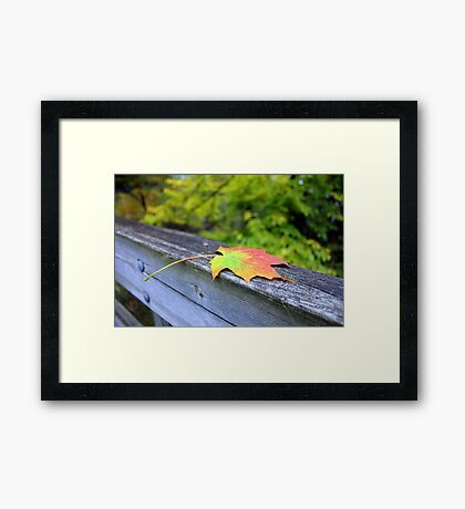 Maple Leaf, Virginia Creeper Trail Framed Print