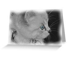 For the Kitten Lover Greeting Card