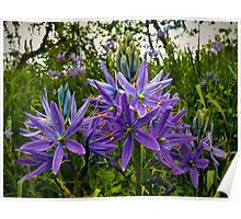 Wild Camas In Open Light Poster