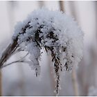 Frozen by liesbeth