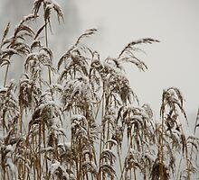 Frozen III by liesbeth