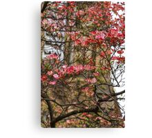 Pink Spring Dogwood Canvas Print