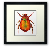 Iridescent Dune Chafer Beetle Framed Print