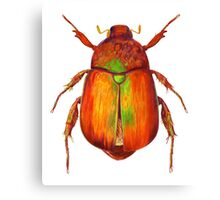 Iridescent Dune Chafer Beetle Canvas Print