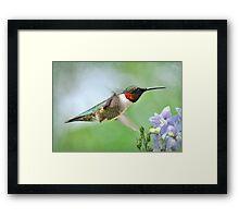 Hummingbird & Lavender Lapspar Framed Print