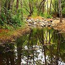 Figueroa Mountain Creek by Sherrie Chavez