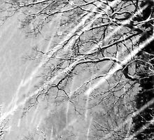 Snow Trails by Steve