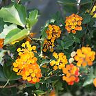 Yellow Flowers by Thomas Murphy