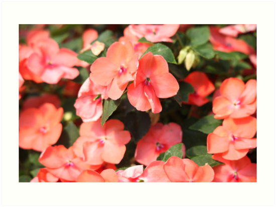 Peach Colored Flowers by Thomas Murphy