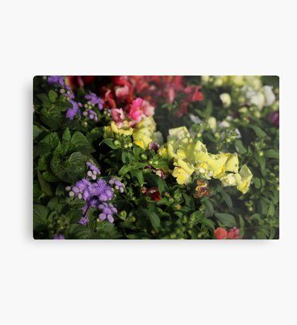 Field of Flowers Metal Print