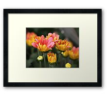 Yellow and Pink Flower Scene 7091 Framed Print