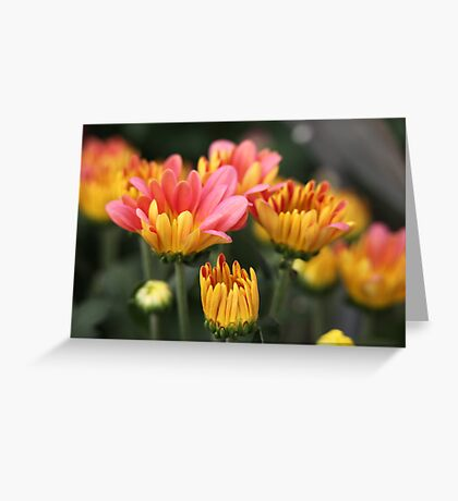 Yellow and Pink Flower Scene 7091 Greeting Card