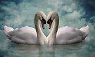 Swan Love by Carol Bleasdale