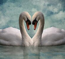 Swan Love by Carol Bleasdale
