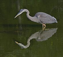 Great Blue Heron on the Hunt, High Park, Tortonto, Ontario by Gerda Grice