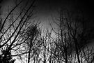 Dark Wood by dgscotland