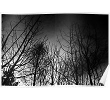 Dark Wood Poster