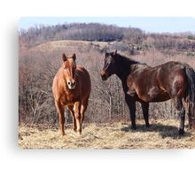 Let me do all the talkin Wilber (Equine) Canvas Print