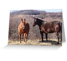 Let me do all the talkin Wilber (Equine) Greeting Card