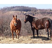Let me do all the talkin Wilber (Equine) Photographic Print