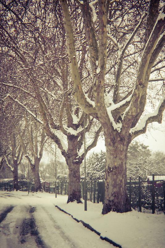 Tree Lined by Richard Pitman