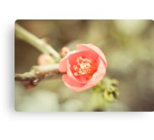 Winter Bloom  Canvas Print