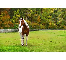 Charming Pinto Horse Photographic Print