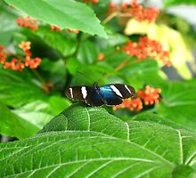 Butterfly by Erinn822