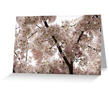 A Cloud of Pastel Pink Cherry Blossoms Celebrating the Arrival of Spring  Greeting Card