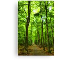 Green Light Harmony - Walking Through The Summer Forest Canvas Print
