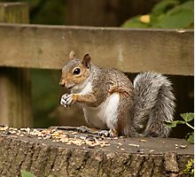 Hungry Squirrel Photographic Print