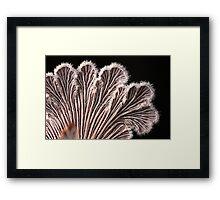 gilly petals Framed Print