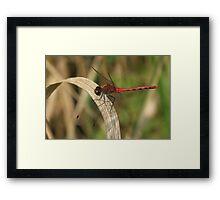Dancing On A Blade Of Grass Framed Print