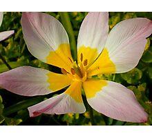 Double Coloured Photographic Print