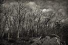 Overcast by John  Kapusta