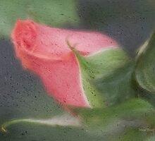 Rendition Of A Rose by Deborah  Benoit