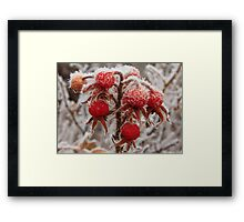 Berries and Frost Framed Print