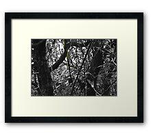 Mr Crawley .. Framed Print