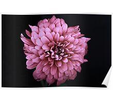 Flower #4 Poster