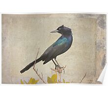 My Grackle Friend Poster