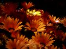 A Little Yellow Among the Orange by Lucinda Walter