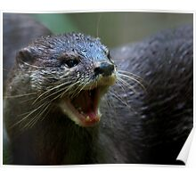 Oriental small Clawed Otter Poster