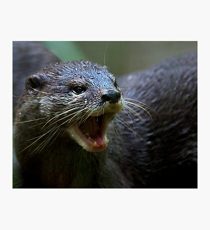 Oriental small Clawed Otter Photographic Print