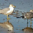 Seagulls by Robin Black