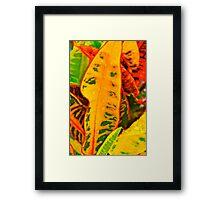 Colourful Crotons Framed Print