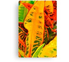 Colourful Crotons Canvas Print
