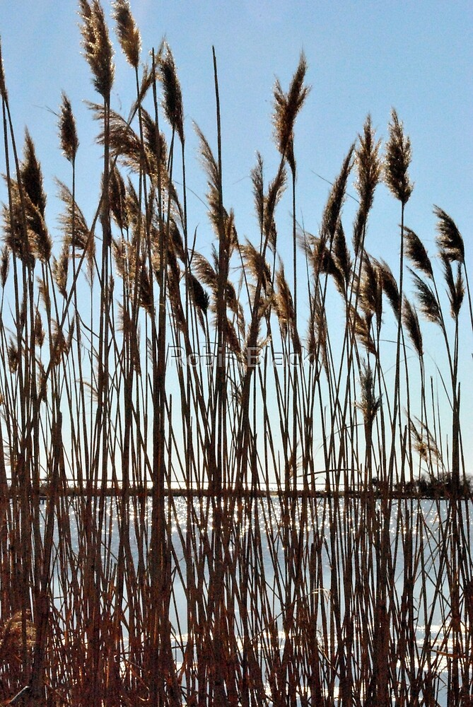 Sound Grasses by Robin Lee