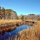 Albemarle Sound by Robin Lee