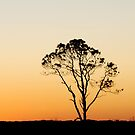 Sunset Tree by Robin Lee